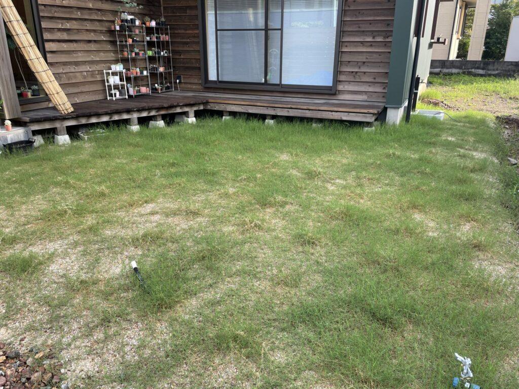 ティトン芝 7週間後 芝刈り前